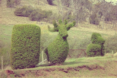 Topiary moose and koala